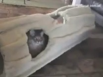 Funky Cat Tunnel Video