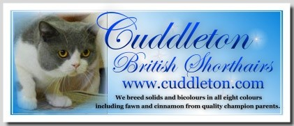 Cuddleton British Shorthairs
